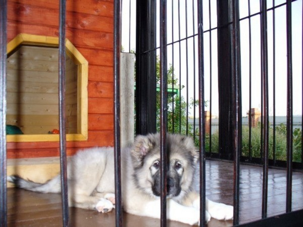 Вольеры для маленьких собак