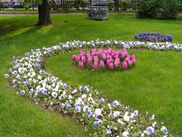 формы цветочных клумб фото