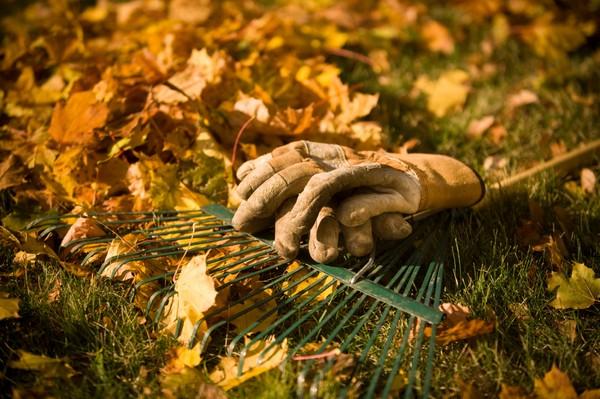 Работы в огороде осенью