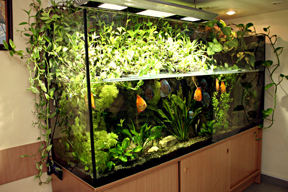 Аквариум с растениями своими руками
