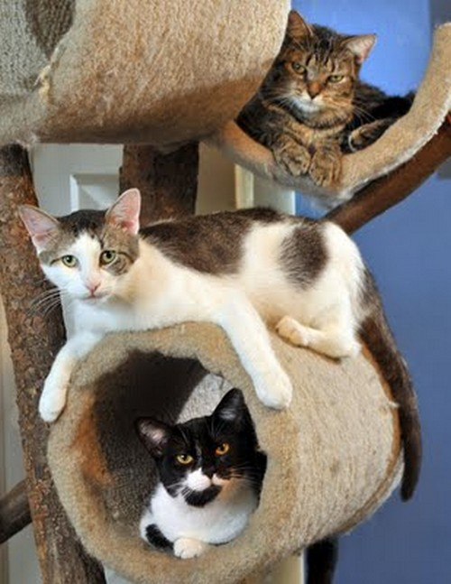 Домик комплекс для кошки
