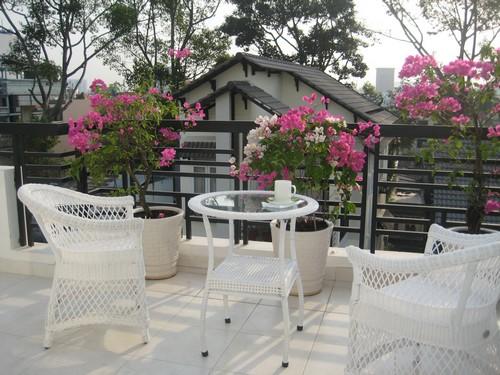 цветы красивый балкон