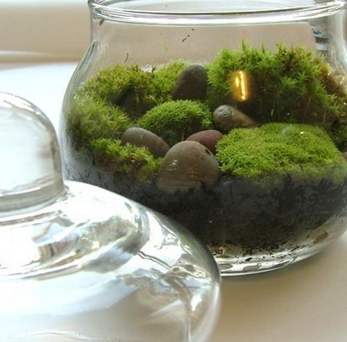 Декоративные украшения из мха в стеклянной вазе