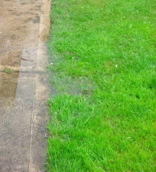 Проблема лишней влаги на садовом участке - отсутствие дренажа