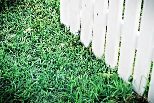 Газонная трава на даче