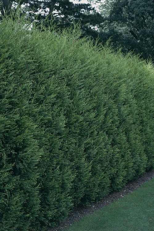Зеленый забор на даче