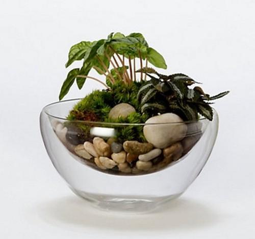 Стеклянные кашпо для цветов