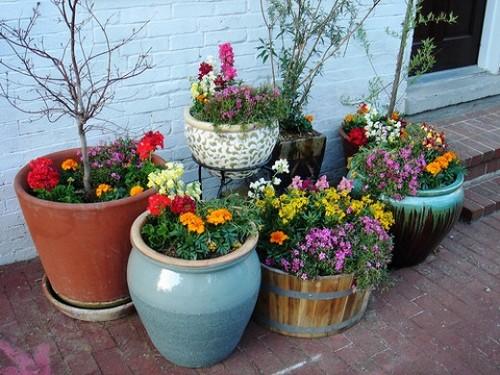 Цветы в горшках на участке