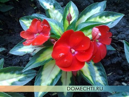 Красивые цветы на весенней клумбе