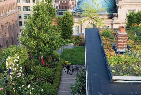 Растения и деревья на крыше здания