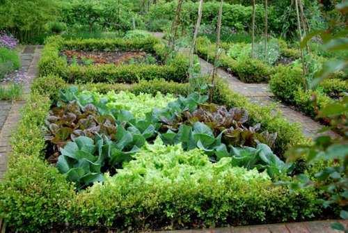 Схема посадки декоративного огорода