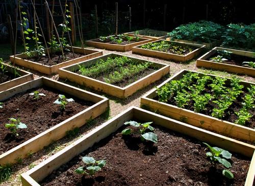 Как сделать красивый огород на участке