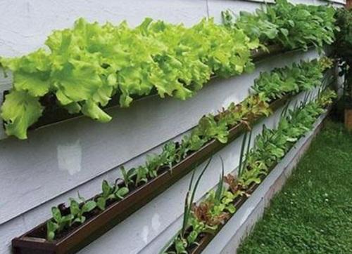 Вертикальный огород в ящиках фото