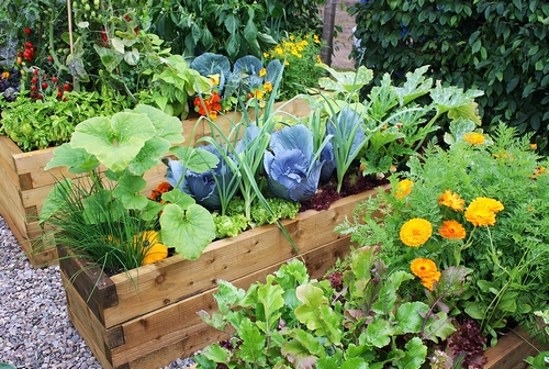 for Vegetable garden designs south africa