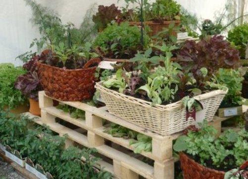 Декоративный огород в ящиках