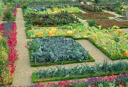 декоративный огород схемы