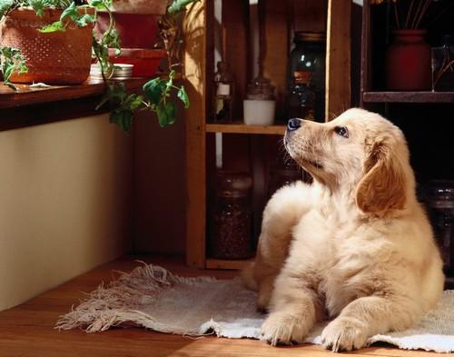 Собака в квартире фото