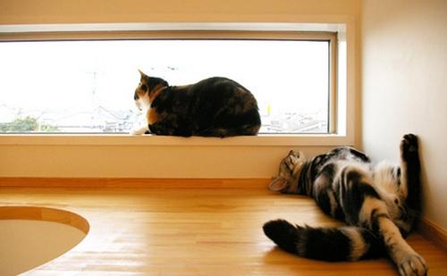 какое животное завести в квартире
