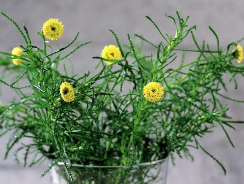 Выращивание цветов в стеклянном бокале