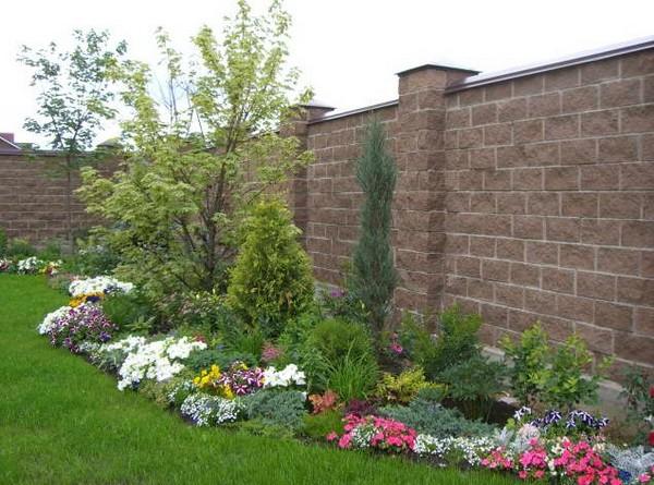 Клумбы из низкорослых сортов цветов 97