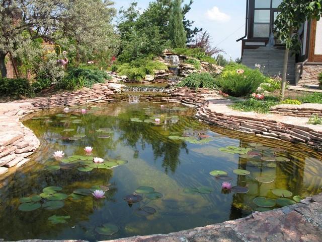 Плавающие растения для оформления пруда