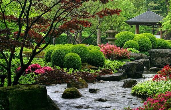 декоративные кустарники для сада фото