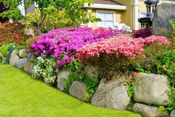 Цветущие кустарники для дачи и сада фото
