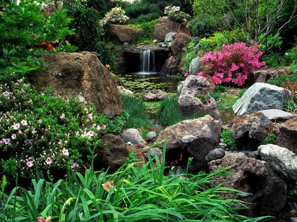 Красивоцветущие кустарники для сада фото