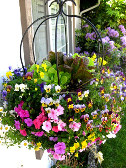 подвесные цветы в саду