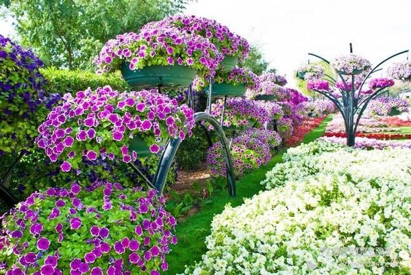 Растения для ландшафтного дизайна фото