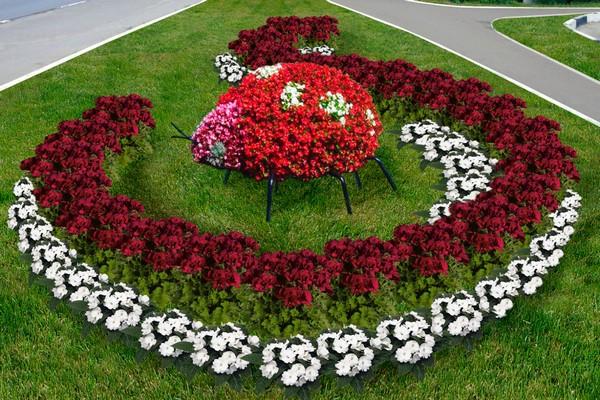 Декоративные растения для ландшафта фото