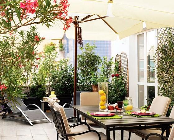 вечнозеленые растения для балкона