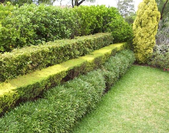 Многоярусная изгородь из вечнозеленых растений