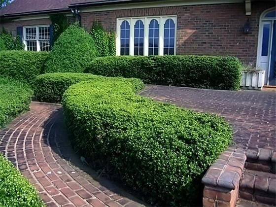 Ландшафтный дизайн с вечнозелеными кустарниками