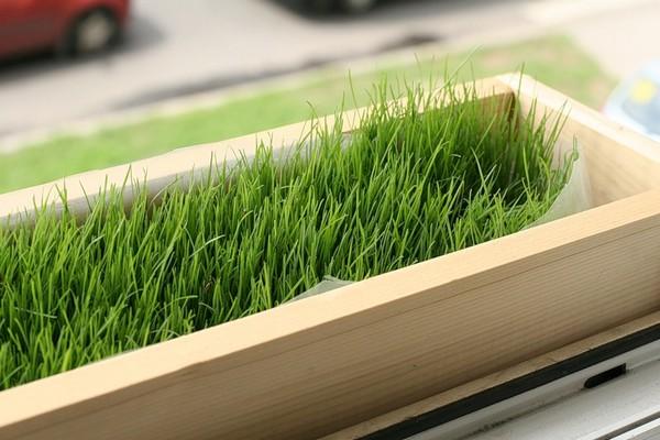 Домашний огород на подоконнике фото