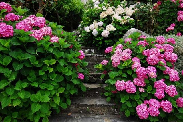 садовые композиции с гортензией