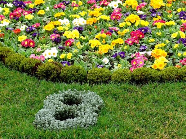 схемы цветников непрерывного цветения