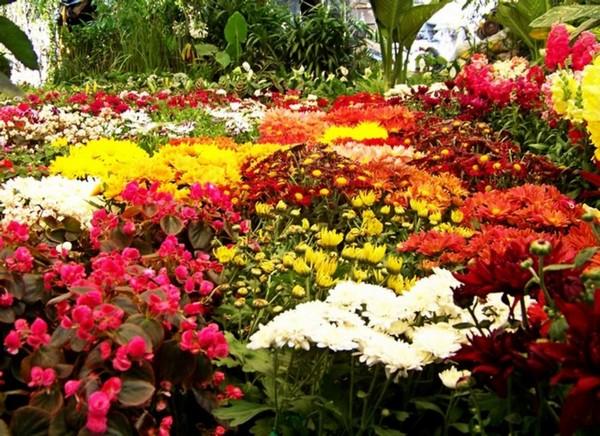 Дизайн клумбы непрерывного цветения