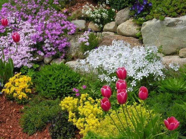 растения для клумбы непрерывного цветения
