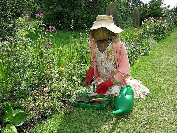 Пугало за работой в огороде