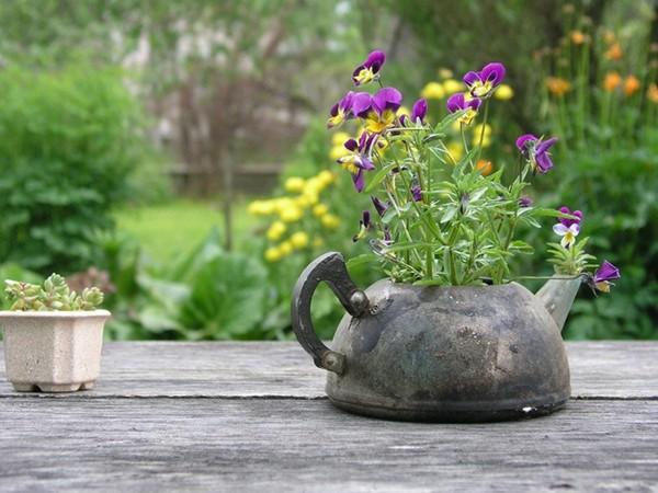 Выращивание цветов в старом чайнике