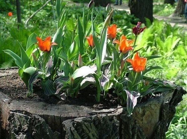 Необычные украшения для дачи и сада: клумбы из пней и брёвен