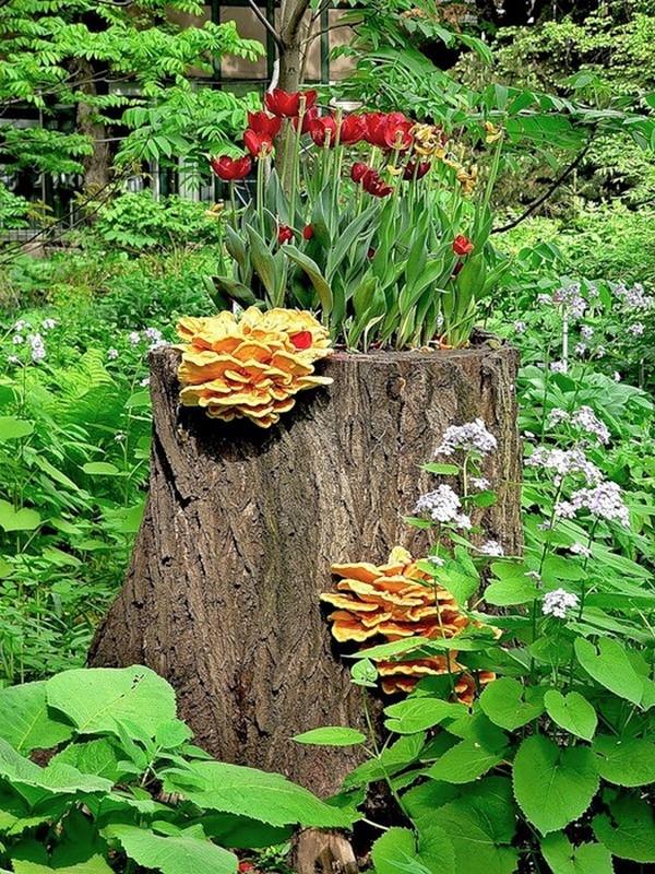 Выращивание цветов на старом пне