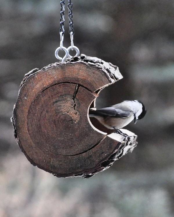 Кормушка для птиц из бревна