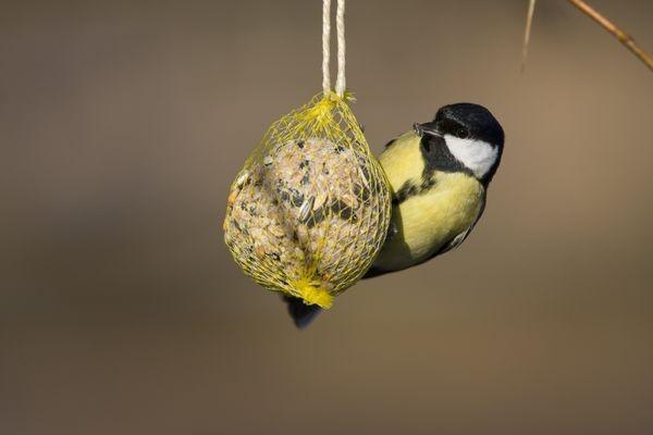 Как сделать кормушку-узелок с кормом для птиц