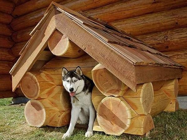 Собачья будка из сруба дерева фото