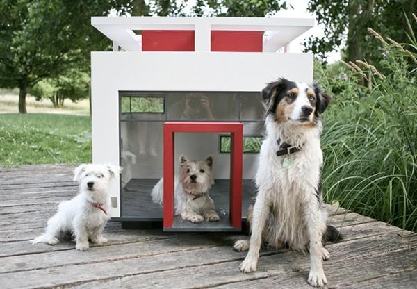 Оригинальные будки для собак фото