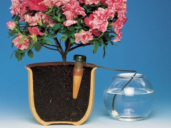 Как поливать цветы когда уезжаешь в отпуск