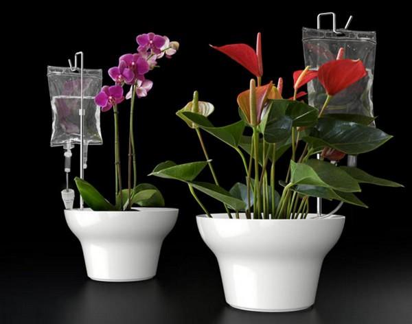 Как организовать полив цветов во время отпуска 104
