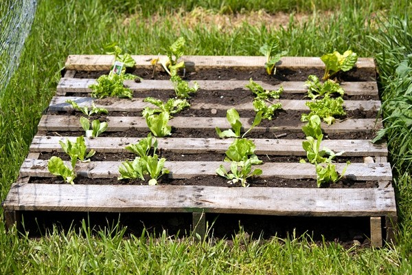 Идея огорода в поддоне